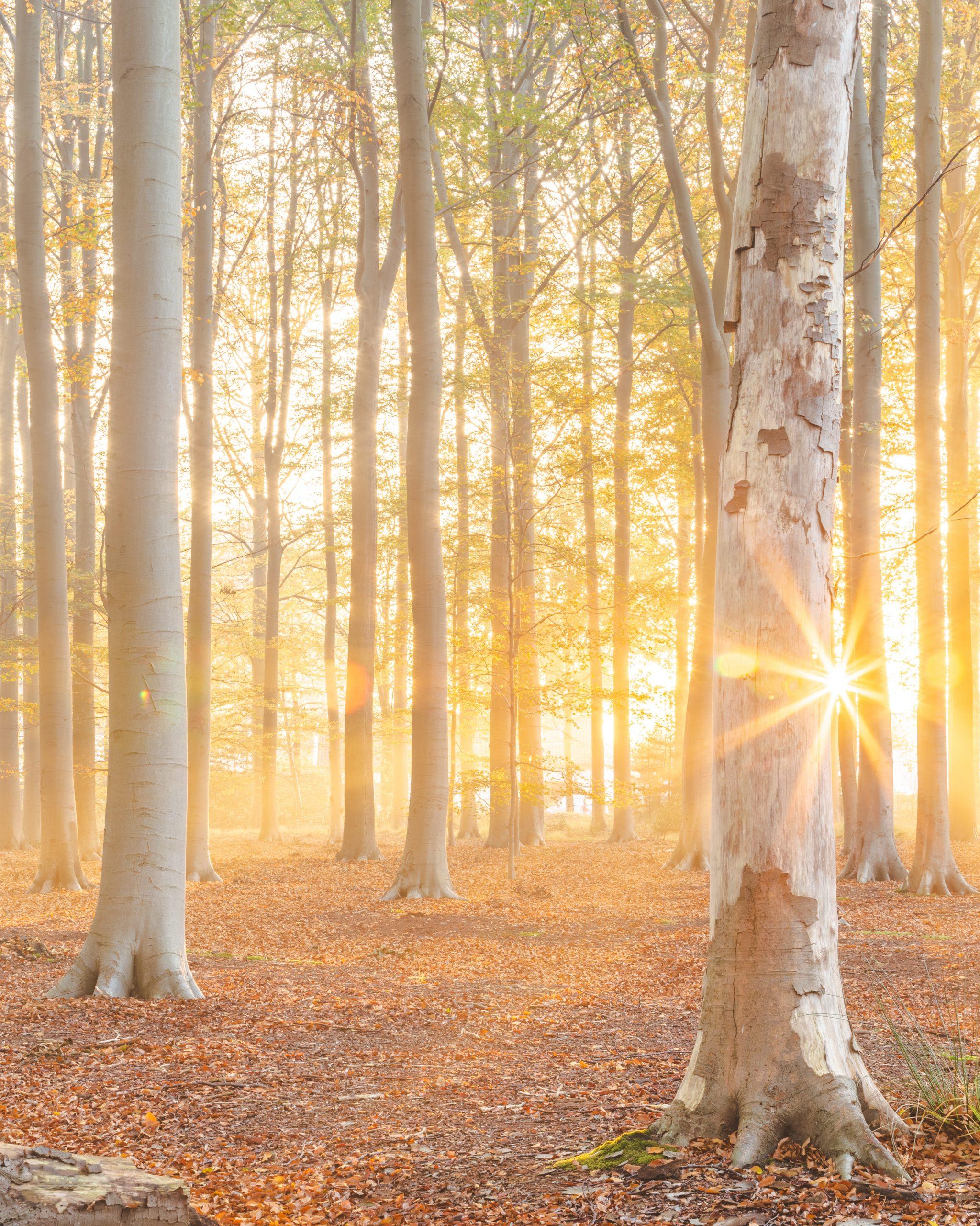 Bright sun bursting through trees